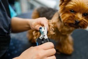 come aprire una toelettatura per cani 1