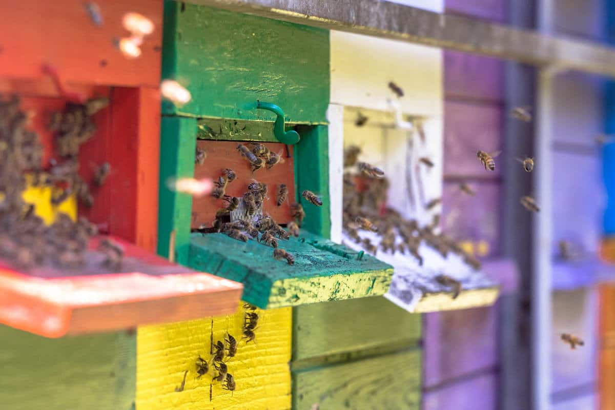 aprire un'attività di apicoltura